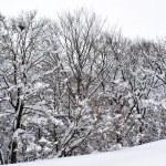 Snow — Stock Photo #7490392