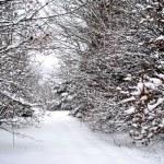 Snow — Stock Photo #7509272