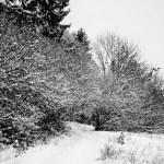 Snow in mountains — Stock Photo #7519637