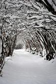 Köknar ve çam ağaçları — Stok fotoğraf
