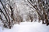 Sneeuw in de bergen — Stockfoto