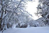 Nieves — Foto de Stock