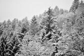 Snow in mountains — Stock Photo
