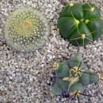 Succulents — Stock Photo