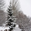Winter trees — Stock Photo #7617225