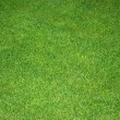 Lawn green — Stock Photo