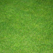 Stock Photo: Lawn green