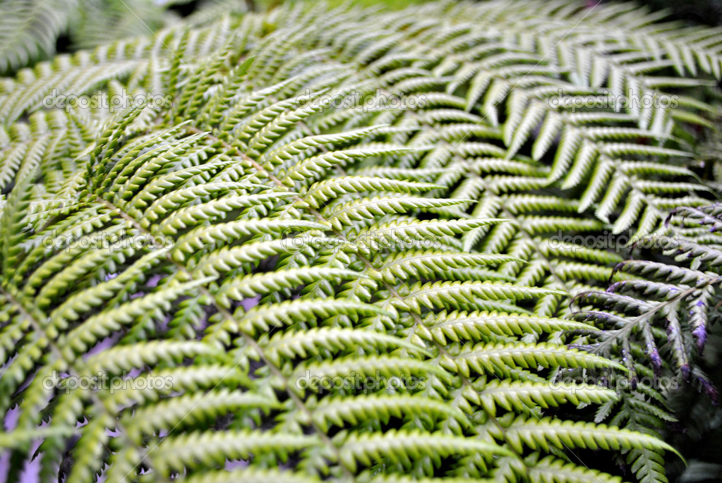 Ornamental tree fern  Stock Photo #7698521