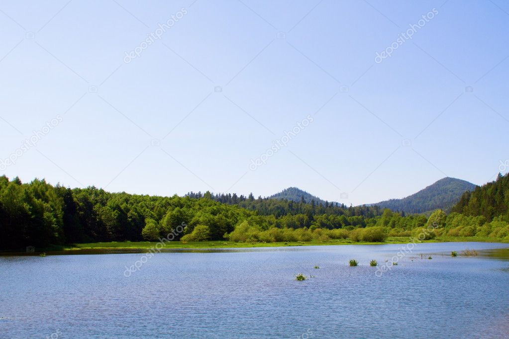 Lake and forest during bright day — Stock Photo #7640519