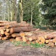 Stock Photo: Forestry Logs.