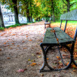 Stock Photo: Empty bench in lazienki park, warsaw, poland