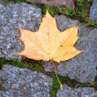 Royalty-Free Stock Photo: Yellow maple leaf on pavement