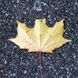 Yellow maple leaf on pavement — Stock Photo
