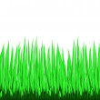 The Grass — Stock Vector