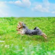 Dog playing in the park — Stock Photo #6761836