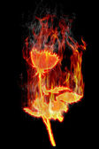 Burning roses — Stock Photo
