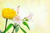Beautiful white rose flowers — Stock Photo