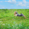 Dog playing in the park — Stock Photo