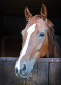 Крупный план лошади — Стоковое фото