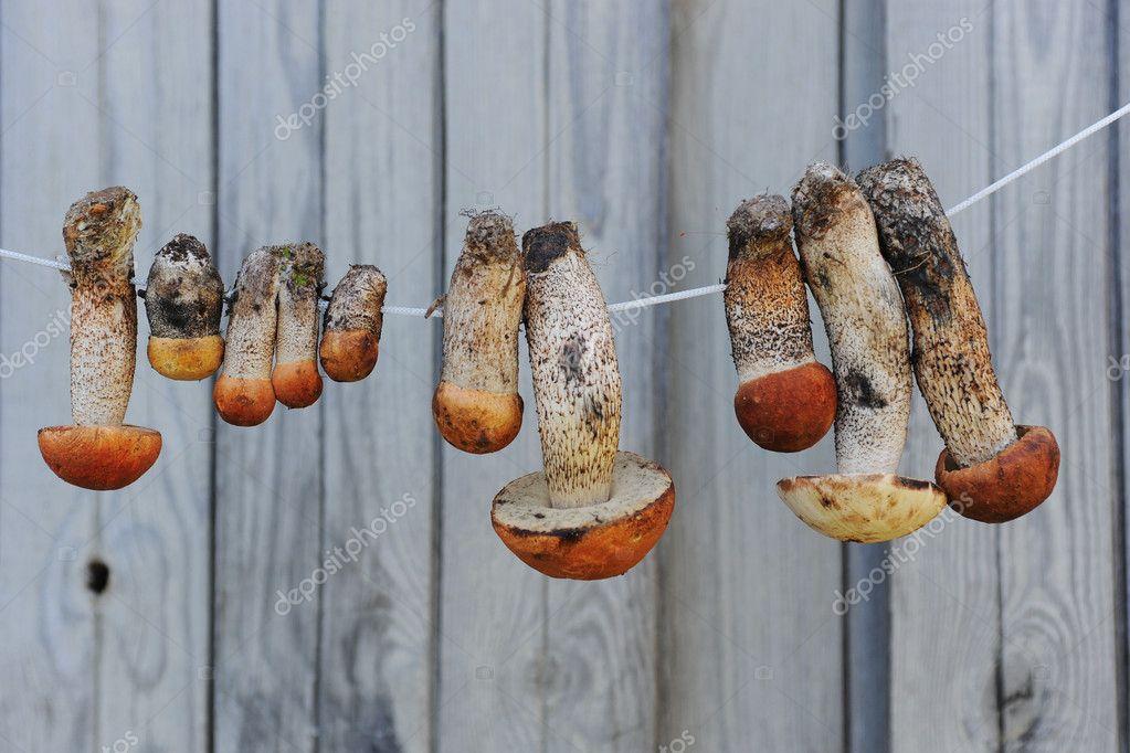 Приготовления грибов сушеных