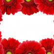 Red Gerbera Flower - Foto Stock