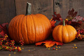 Colorful pumpkins with wood background — Stok fotoğraf
