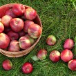 Overhead shot of a basket of freshly picked apples — Stock Photo