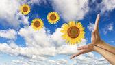 Hände mit einer sonnenblume auf hintergrund von blauer wolkenloser himmel — Stockfoto