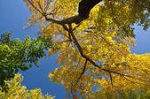 Zweig mit gelben Blättern — Stockfoto