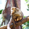 Stock Photo: Monkey in a green bush at the zoo