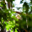 Monkey in a green bush at the zoo — Stock Photo