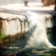 Polar bear in the water at the zoo — Stock Photo