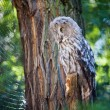 Big owl at the zoo — Stock Photo #6888243