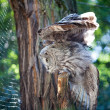 Big owl at the zoo — Stock Photo #6888253
