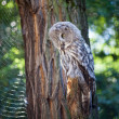 Stock Photo: Big owl at the zoo