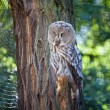 Big owl at the zoo — Stock Photo #6888299