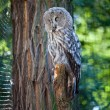 Big owl at the zoo — Stock Photo #6888314