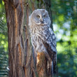 Big owl at the zoo — Stock Photo #6888330