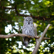Big owl at the zoo - Stock Photo