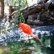 Ibis bird at the zoo — Stock Photo