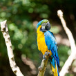 Macaws in the trees at the zoo — Stock Photo