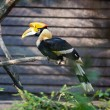 Toucan bird at the zoo — Stock Photo #6889379