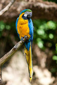 Macaws in the trees at the zoo — Stockfoto