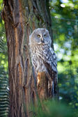 Big owl at the zoo — Stock Photo