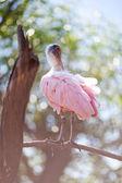動物園でトキ — ストック写真
