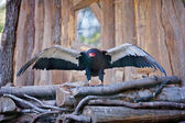 Eagle sitting on a nest at the zoo — Stock Photo