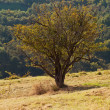 Stock Photo: Tree standing on hillside
