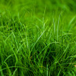 Background of lush green grass — Stock Photo
