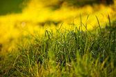 фоне пышной зеленой травы в свет солнца — Стоковое фото