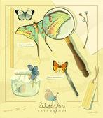 Butterflies entomology — Stock Vector